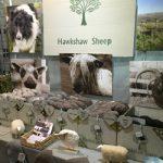 Hawkshaw Sheep