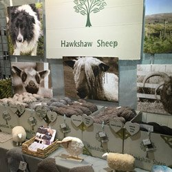Hawkshaw Sheep